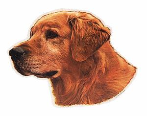 GOLDEN RETRIEVER I